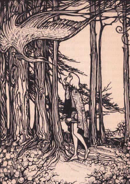 Boekillustratie-1